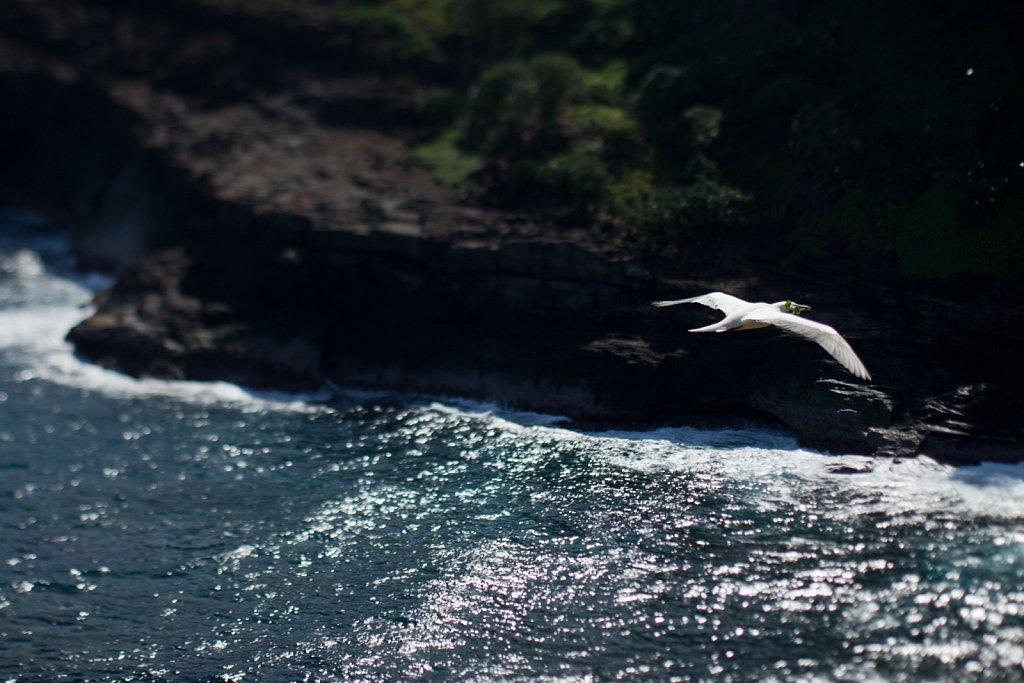 Kilauea-2721.jpg